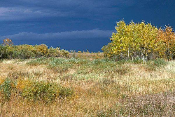 Agassiz Wilderness Area