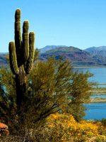 cactus-alamo-lake-state-park.jpg