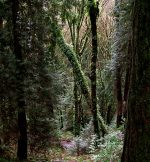Saint Edward State Park Forest